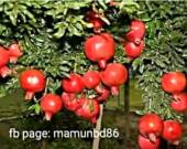 chumob.cut.paste.photo.editor1505206025115