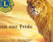 M- Lions